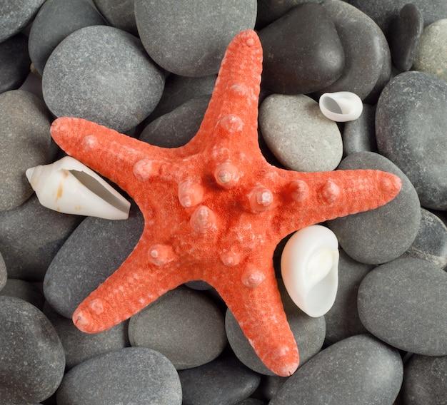Stella di mare arancione