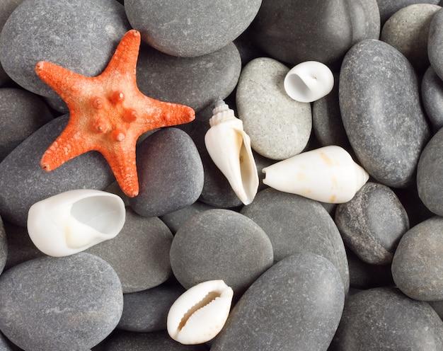 Stella marina a cinque punte arancione