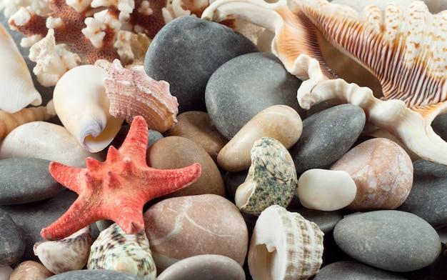 Stella marina rossa con conchiglie