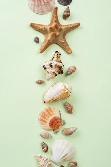 Stelle marine e conchiglie allineate