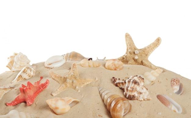 Stelle marine e conchiglie sulla spiaggia