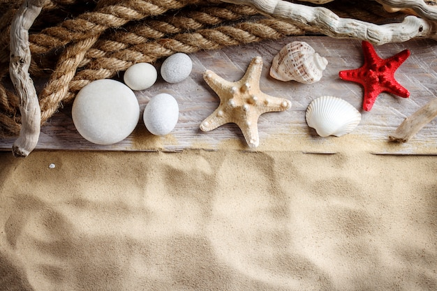 Stelle marine e conchiglie sulla spiaggia.