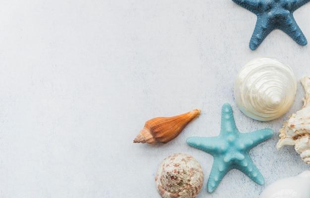 Stelle marine e conchiglie sulla superficie bianca