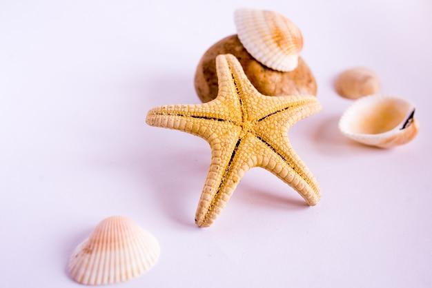 Stelle marine e conchiglie