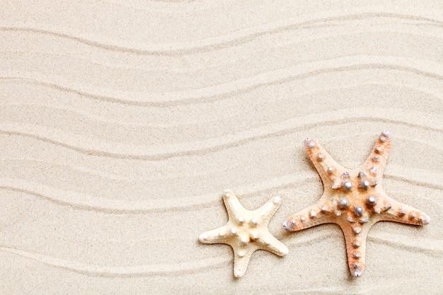 Stelle marine e foglie di palma che si trovano sulla sabbia di mare