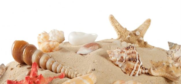 Stelle marine nella sabbia