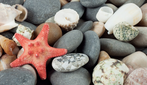 Stelle marine rosse sulle rocce