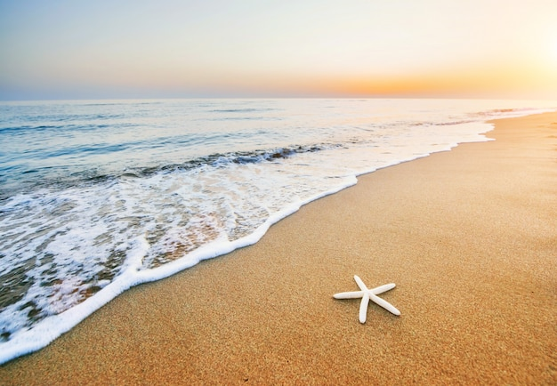 Stelle marine sulla spiaggia. composizione romantica
