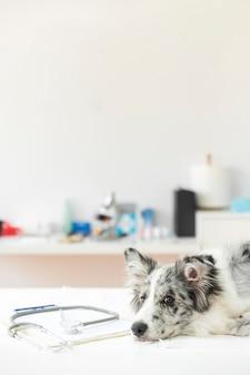 Stetoscopio sulla lavagna per appunti con il cane malato che si trova sul tavolo operatorio nella clinica