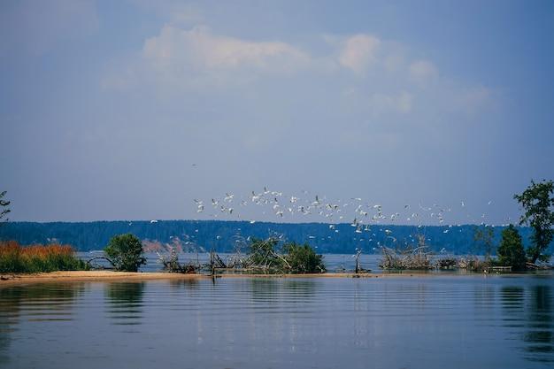 Stormo di gabbiani bianchi che volano in acqua della spiaggia in estate