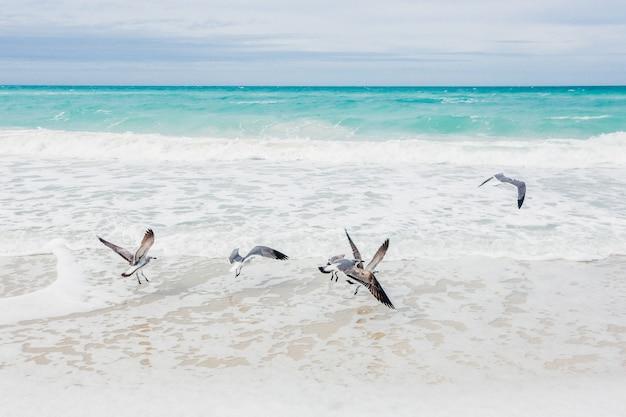 Stormo di gabbiani in riva al mare