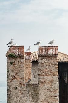 Stormo di gabbiani siedono sul tetto di tegole