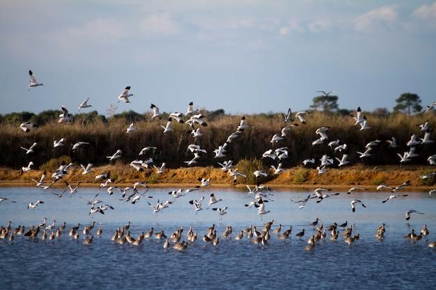 Stormo di uccelli che volano