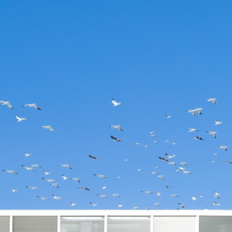 Stormo di uccelli in volo