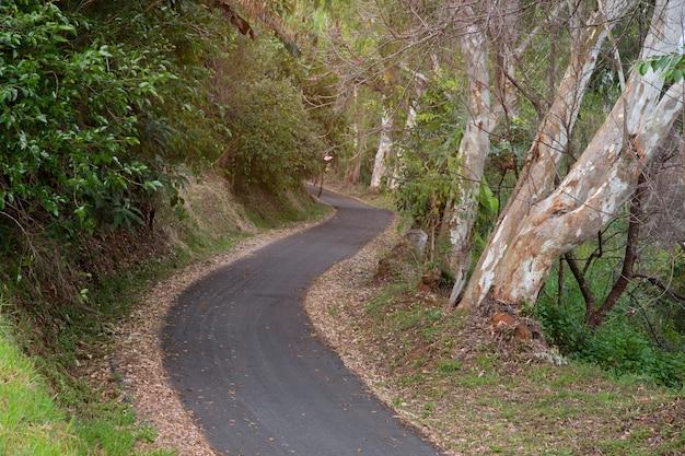 Strada asfaltata attraverso nella foresta.