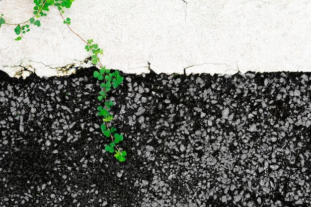 Strada asfaltata danneggiata e una pianta rampicante.