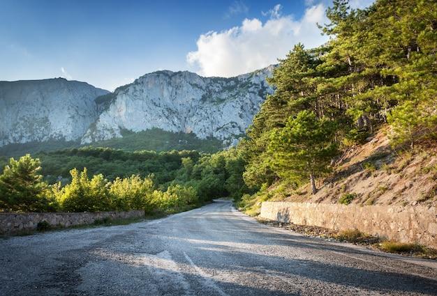 Strada asfaltata nella foresta di estate al tramonto