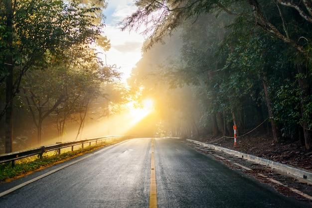 Strada attraverso la foresta autunnale in una mattina nebbiosa con raggi di sole