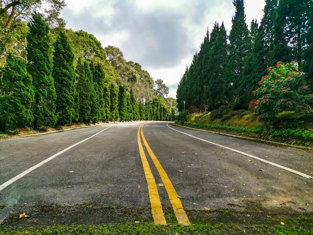 Strada attraverso una foresta