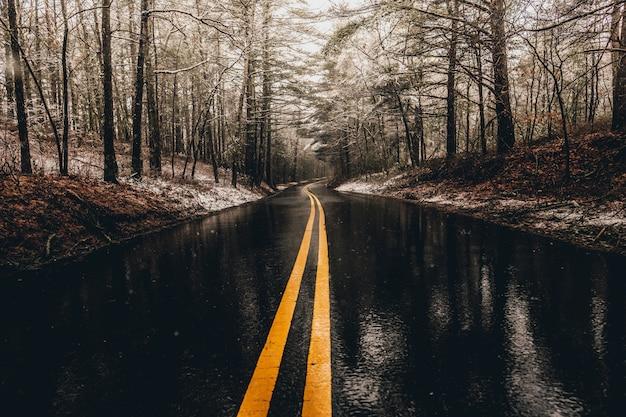 Strada bagnata nella foresta
