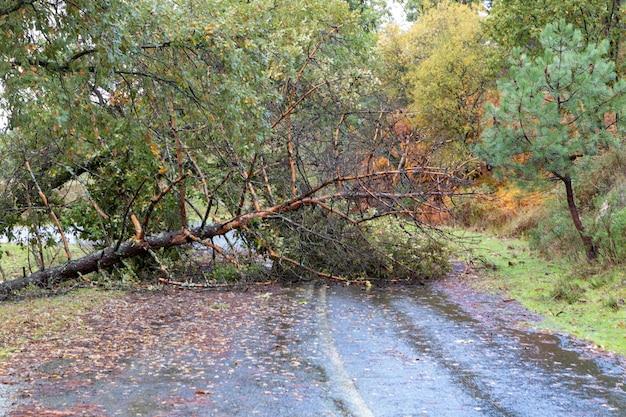 Strada bagnata vuota con un albero caduto