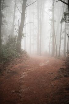 Strada campestre in foresta con nebbia