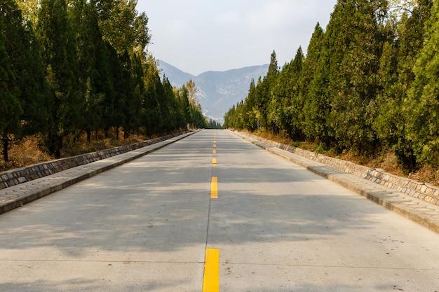 Strada cementata con una linea di marcatura gialla attraverso una foresta in montagna