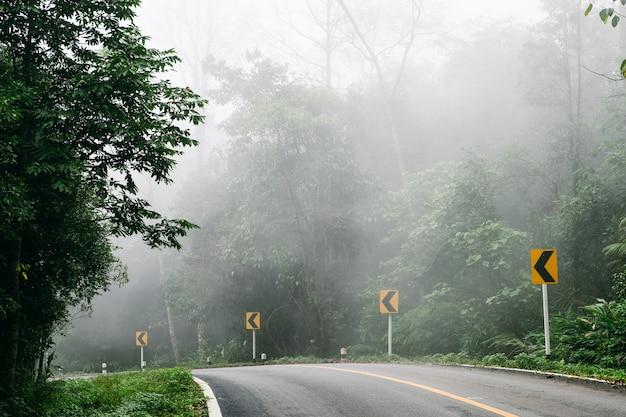 Strada con la foresta della natura e la strada nebbiosa della foresta pluviale.