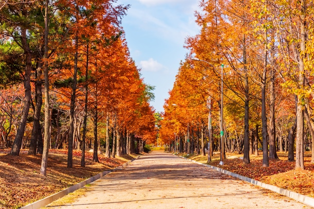 Strada d'autunno nel parco