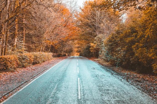 Strada della campagna attraverso il legno in autunno
