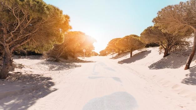 Strada deserta tra gli alberi sulla luminosa giornata di sole