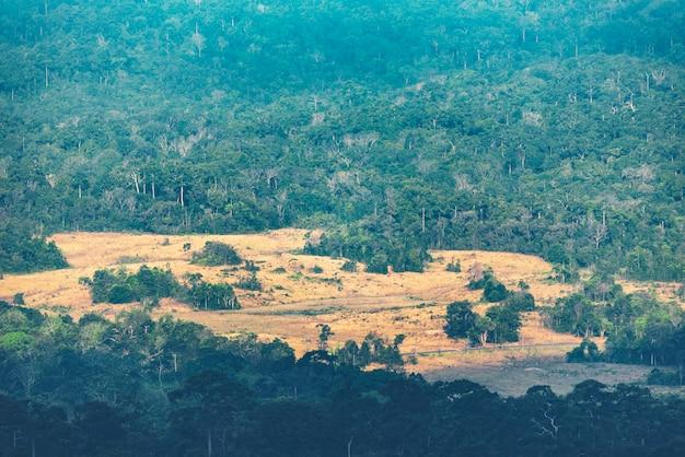Strada di campagna con alberi su entrambi i lati