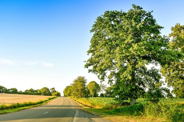 Strada di campagna tra terreni agricoli, prati e grandi alberi, al tramonto. bretagna francia.