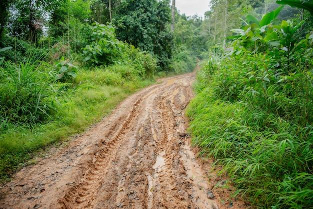 Strada di fango nella foresta