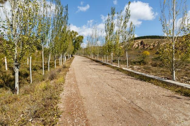 Strada di ghiaia del villaggio nelle montagne sugli alberi lungo la strada