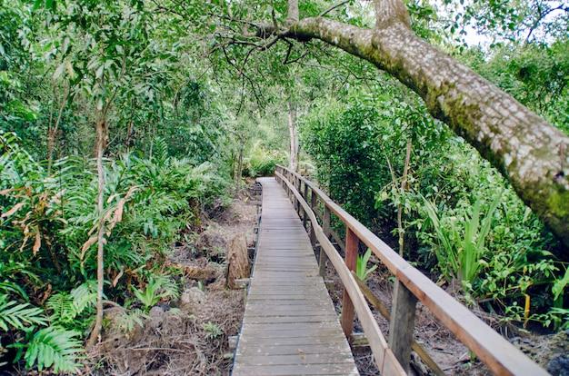 Strada di legno nella giungla