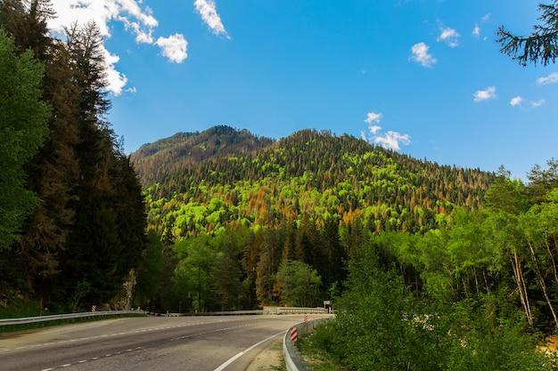 Strada di montagna. bello paesaggio della foresta verde intenso e gialla sul pendio della montagna. natura selvaggia
