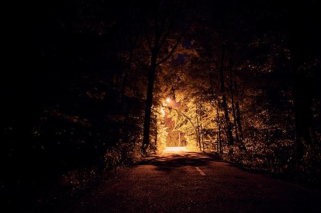 Strada di notte sulla foresta oscura. lampioni i