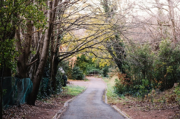 Strada forestale creepy