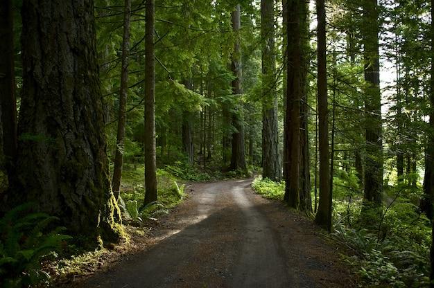Strada forestale estiva