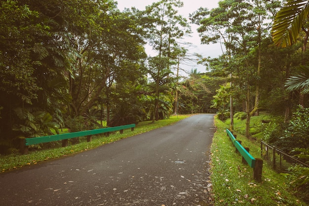 Strada in giardino botanico il giorno nebbioso, isola di oahu, hawaii