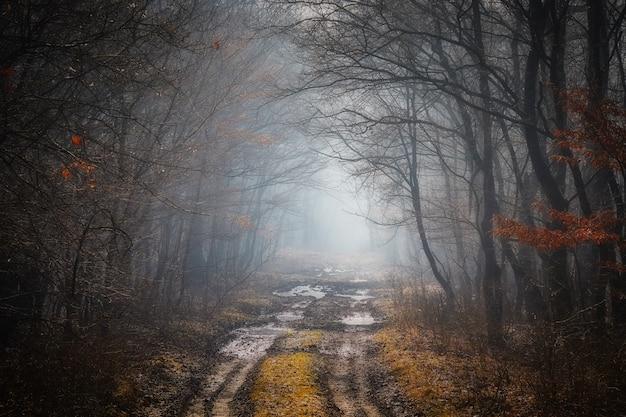 Strada in una foresta di querce in autunno in una giornata nebbiosa