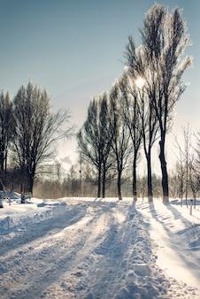 Strada invernale in neve