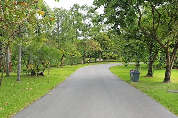 Strada nel parco con l'albero intorno. parco verde e tranquillo per l'esercizio e il relax.