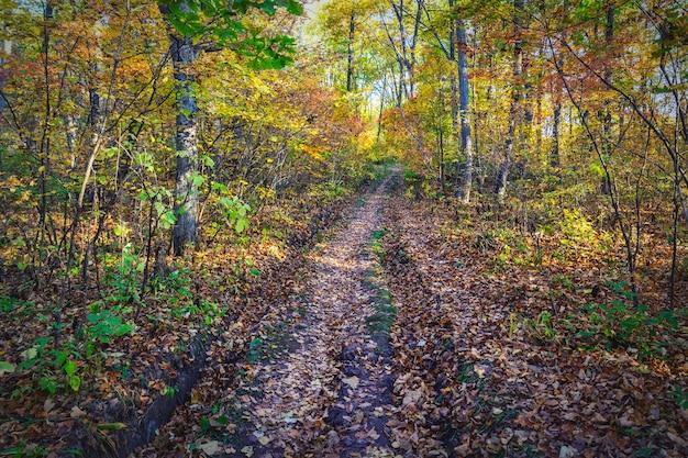 Strada nella bellissima foresta d'autunno con alberi colorati