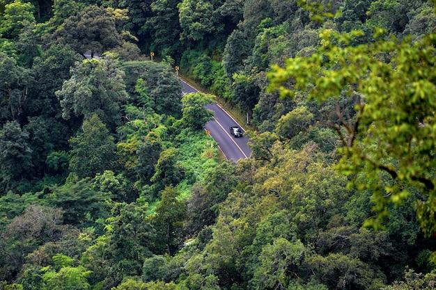 Strada nella foresta e la montagna da un angolo alto