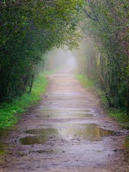 Strada nella nebbia con pozzanghere