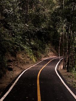 Strada, passaggio pedonale nella foresta verde in parco nazionale della tailandia