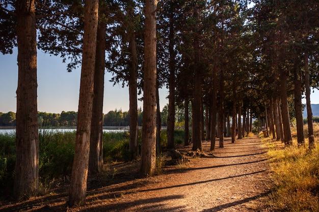 Strada piacevole e tranquilla attraverso la fila di alberi. sant llorenç de montgai. catalogna. fiume segre.