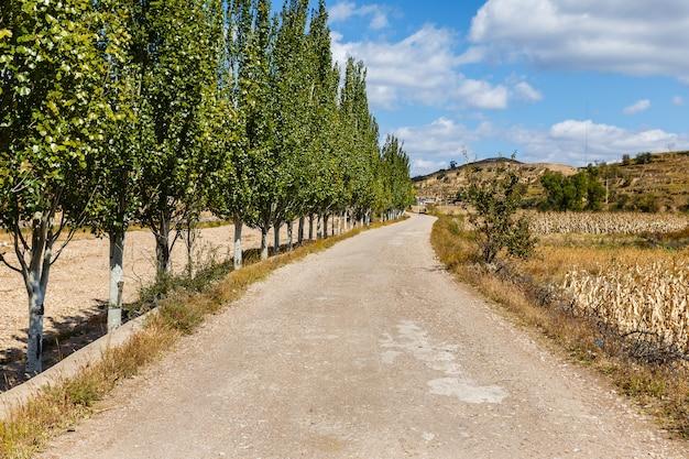 Strada sterrata lungo un campo di grano con alberi lungo la strada